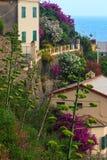 Flor Vernazza, Cinque Terre Imágenes de archivo libres de regalías