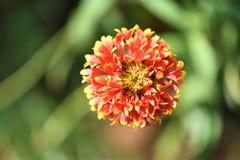 Flor vibrante agradável da cor fotos de stock royalty free
