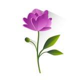 Flor Violet Green Leaf Isolated de la peonía Foto de archivo libre de regalías