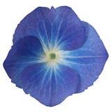 Flor violeta Imagem de Stock Royalty Free