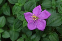 Flor violeta Imágenes de archivo libres de regalías