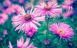 Flor violeta Fotos de archivo