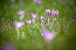 Flor violeta Foto de archivo libre de regalías