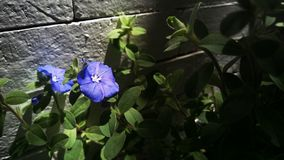 Flor violeta Fotografia de Stock Royalty Free