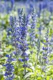 Flor violeta Fotos de archivo libres de regalías