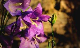 Flor violeta bonita imagem de stock