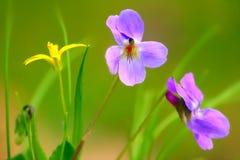 Flor violeta contra fondo verde Imagenes de archivo