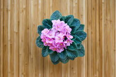 Flor violeta cor-de-rosa Fotos de Stock Royalty Free