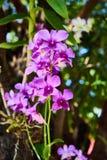 Flor violeta de las orquídeas Fotos de archivo