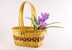 Flor violeta del tulipán en cesta Imagen de archivo libre de regalías