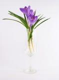 Flor violeta del tulipán en florero Imágenes de archivo libres de regalías