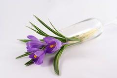 Flor violeta del tulipán en florero Foto de archivo