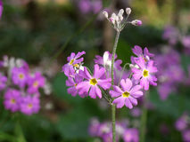 Flor violeta en campo Imagenes de archivo
