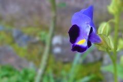 Flor violeta hermosa Fotografía de archivo