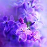 Flor violeta hermosa de la lila imagenes de archivo