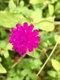 Flor violeta no fundo da natureza foto de stock