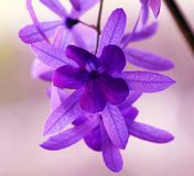 Flor violeta púrpura hermosa, naturaleza magnífica fotos de archivo