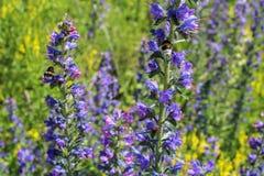 Flor violeta y amarilla con bublebee y el fondo blured Imagenes de archivo