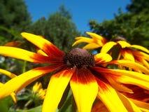 Flor viva Fotografía de archivo libre de regalías