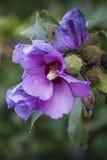 Flor viva da cerca Imagem de Stock