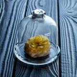 Flor viva debajo del casquillo de cristal Imagen de archivo libre de regalías