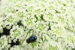 A flor voa e as flores imagem de stock royalty free