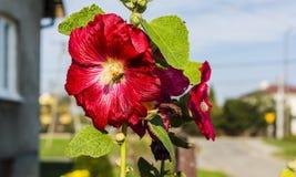 flor y abeja Imagen de archivo