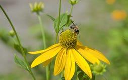 Flor y abeja fotografía de archivo libre de regalías