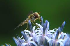 Flor y abeja Fotos de archivo