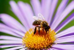 Flor y abeja Imágenes de archivo libres de regalías