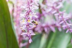 Flor y abeja de la primavera Foto de archivo