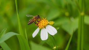Flor y abeja de la primavera Imagen de archivo