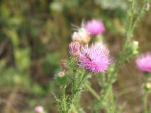 Flor y abeja rosadas Fotos de archivo libres de regalías