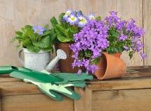 Flor y accesorios que cultivan un huerto Foto de archivo
