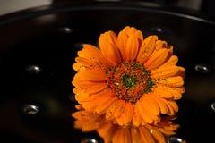 Flor y acero anaranjados fotografía de archivo