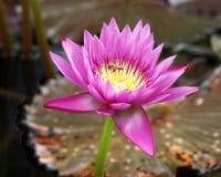 Flor y amigo de Lilly. Imágenes de archivo libres de regalías