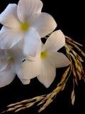 Flor y arroz Foto de archivo libre de regalías