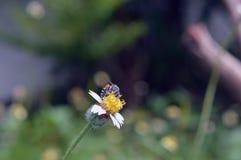Flor y bee4 Fotografía de archivo libre de regalías