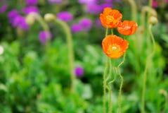 Flor y brote Foto de archivo libre de regalías