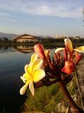 Flor y cielo Fotos de archivo