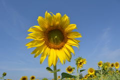Flor y cielo imagen de archivo libre de regalías