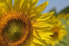 Flor y cielo imágenes de archivo libres de regalías