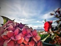 Flor y cielo azul imagenes de archivo