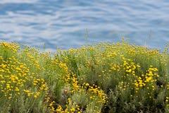 Flor y el mar Imágenes de archivo libres de regalías
