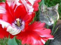 Flor y gato Fotografía de archivo libre de regalías