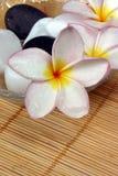 Flor y guijarros de Frangipane en el tazón de fuente de cristal Imagen de archivo libre de regalías