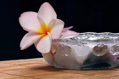 Flor y guijarros de Frangipane en el tazón de fuente de cristal Foto de archivo libre de regalías