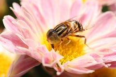 Flor y hada de la belleza Imagenes de archivo