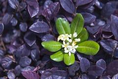 Flor y hoja Fotos de archivo
