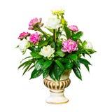 Flor y hoja en florero Fotografía de archivo libre de regalías
